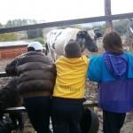 La vaca Carlota
