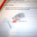 Floridures 3EP-6EP 020